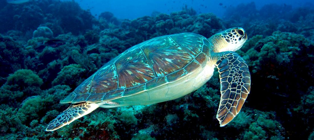 Sea turtles page